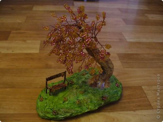 Скамейка и дерево в приближенном виде. фото 3