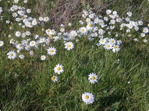 Здраствуйте!!!  Хотела поделиться с вами  нашей февральской весной. Я жыву на острове Сардиния (Италия) уже два года.  Самая красивая пора года на этом острове весна.   фото 3