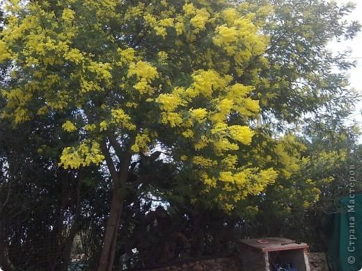 Здраствуйте!!!  Хотела поделиться с вами  нашей февральской весной. Я жыву на острове Сардиния (Италия) уже два года.  Самая красивая пора года на этом острове весна.   фото 7