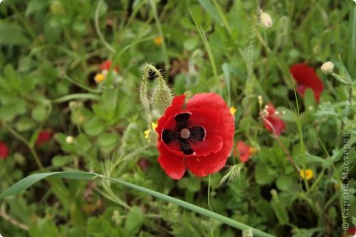 Здраствуйте!!!  Хотела поделиться с вами  нашей февральской весной. Я жыву на острове Сардиния (Италия) уже два года.  Самая красивая пора года на этом острове весна.   фото 12