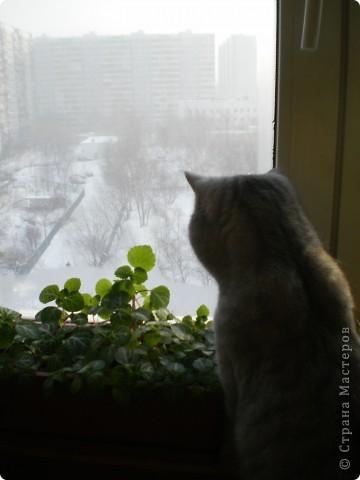 Ура! И все таки она распустилась!Эта фотка была сделана 27 декабря 2010г. фото 12
