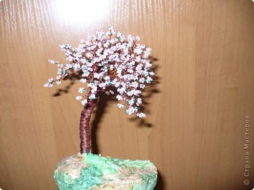Сакура первое деревце, которое я сделала фото 1