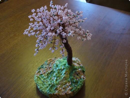 Сакура первое деревце, которое я сделала фото 2