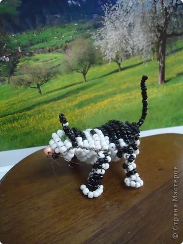 Кошка-непоседа фото 5