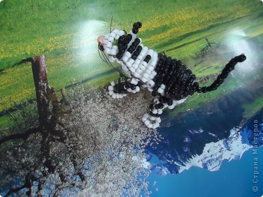 Кошка-непоседа фото 9