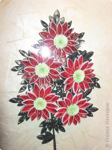 хризантемы фото 1
