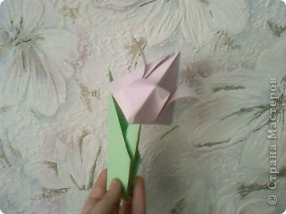 Тюльпан фото 1