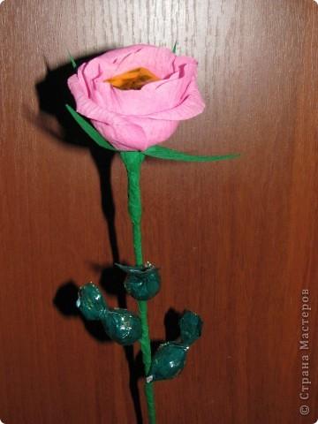 Такие разные сладкие цветы фото 1