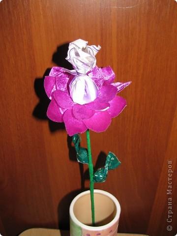 Такие разные сладкие цветы фото 15