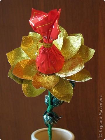 Такие разные сладкие цветы фото 16