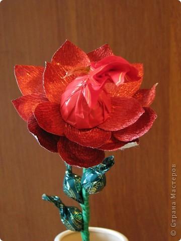Такие разные сладкие цветы фото 18
