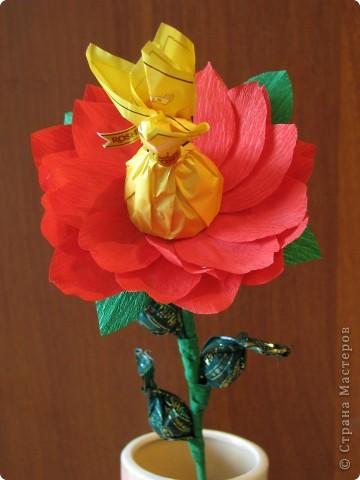 Такие разные сладкие цветы фото 19