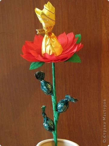 Такие разные сладкие цветы фото 20