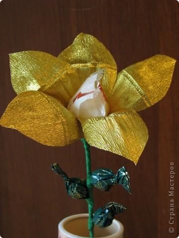 Такие разные сладкие цветы фото 22