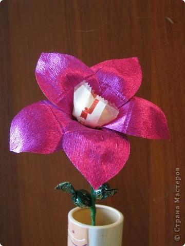 Такие разные сладкие цветы фото 23