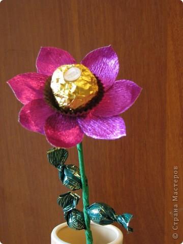 Такие разные сладкие цветы фото 24