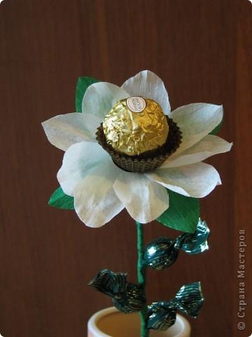 Такие разные сладкие цветы фото 26