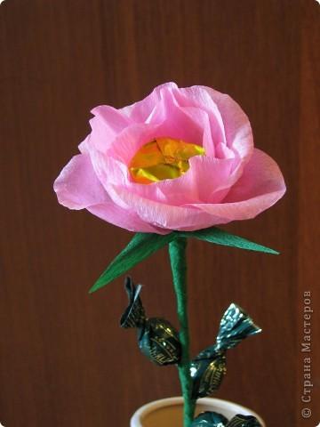 Такие разные сладкие цветы фото 4