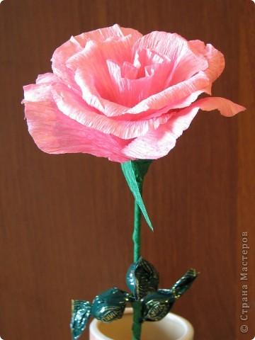Такие разные сладкие цветы фото 6