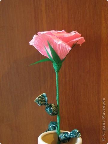 Такие разные сладкие цветы фото 7