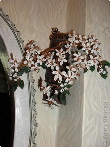 Мое маленькое дерево фото 4