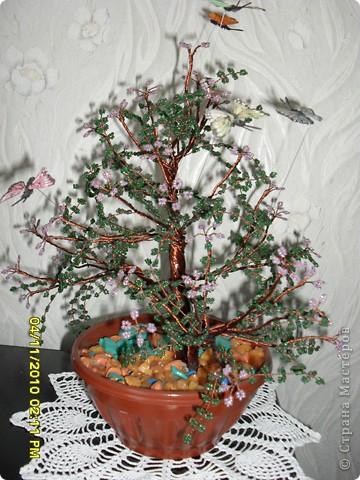 Мое маленькое дерево фото 2