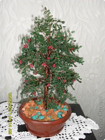 Мое маленькое дерево фото 3