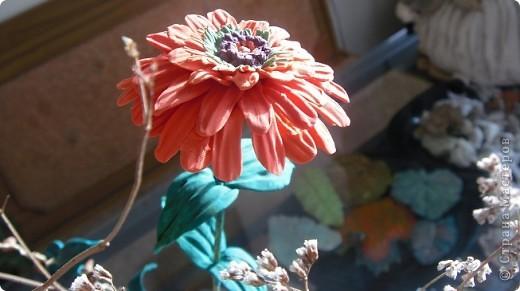 Циния-воплощение неброской красоты органического сада в самом его расцвете. фото 5