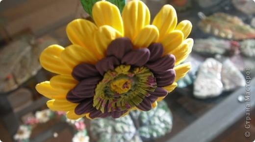Циния-воплощение неброской красоты органического сада в самом его расцвете. фото 4
