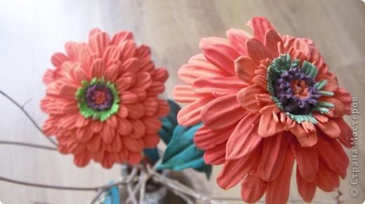 Циния-воплощение неброской красоты органического сада в самом его расцвете. фото 6