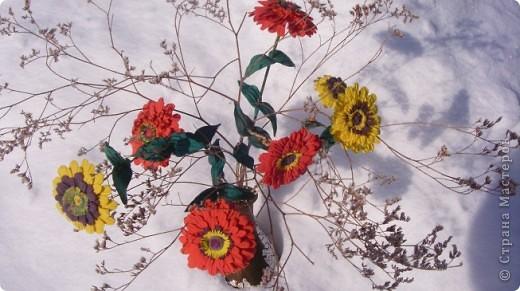 Циния-воплощение неброской красоты органического сада в самом его расцвете. фото 11