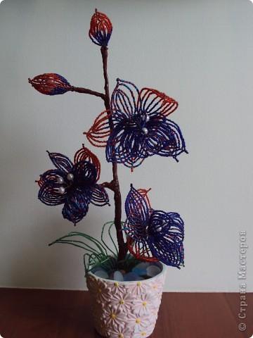Первая Орхидея.  (мамина). фото 2
