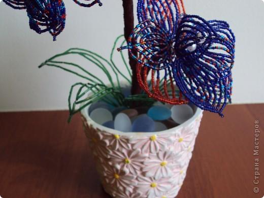 Первая Орхидея.  (мамина). фото 1