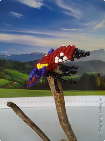И веселый попугай... фото 2