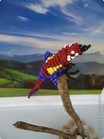 И веселый попугай... фото 1