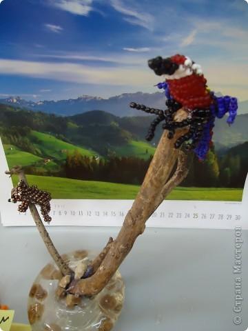 И веселый попугай... фото 4