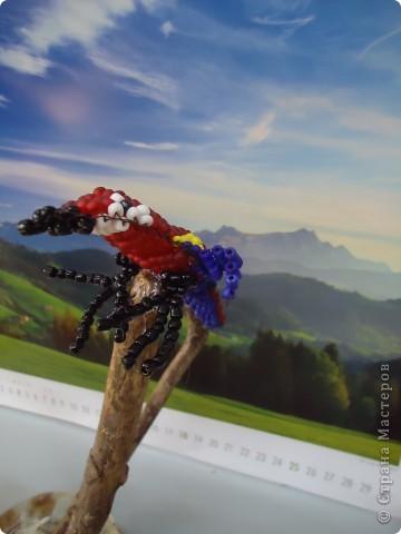 И веселый попугай... фото 3