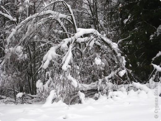 Ледяной дождь, мороз да снег в этом году таких чудес натворили, что даже и выбрать-то самое интересное сложно. фото 2