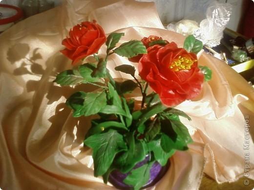 Первый опыт, Аленький цветочек. фото 1
