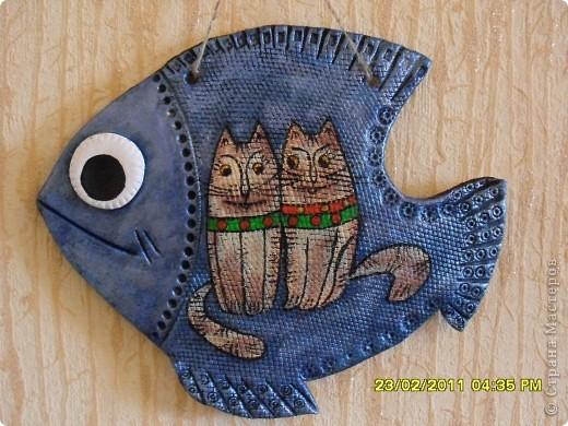 рыба кошачья фото 1