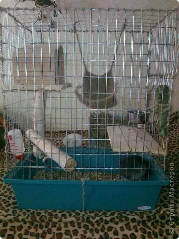 Была старая клетка, в 3 раза меньше, расчитана для кролика,для hgsueyf надо больше места и вот... фото 2