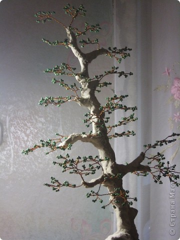Высота дерева примерно 50 см фото 7