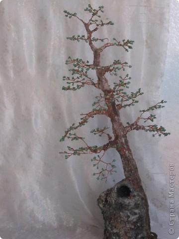 Высота дерева примерно 50 см фото 8