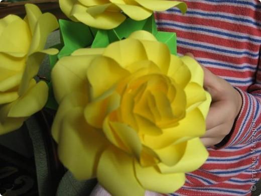Хочу Вам представить новый сорт роз Глория,запах исключительный! Это Вам подтвердит моя внучка Виктория. фото 2