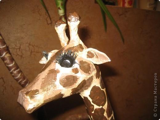 Жираф. фото 2