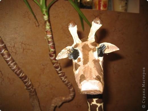 Жираф. фото 3