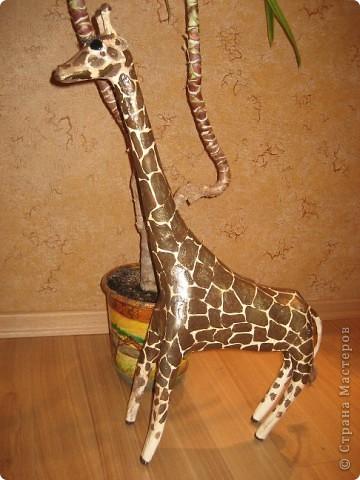 Жираф. фото 4