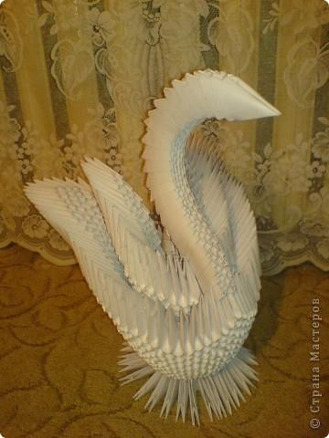 Лебедь золотой  и очень тяжелый фото 3