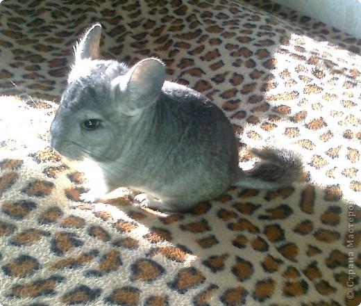 Была старая клетка, в 3 раза меньше, расчитана для кролика,для hgsueyf надо больше места и вот... фото 3