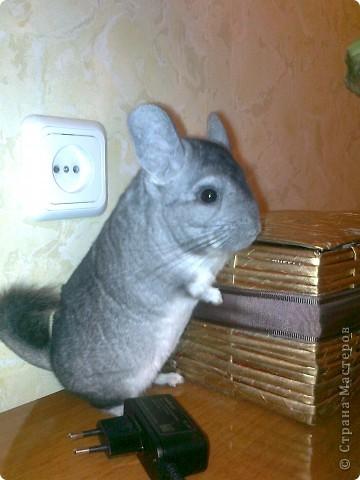 Была старая клетка, в 3 раза меньше, расчитана для кролика,для hgsueyf надо больше места и вот... фото 4